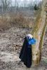 Obstbaumschnitt mit Herrn Rausch_14