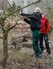 Obstbaumschnitt mit Herrn Rausch_2