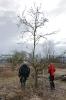 Obstbaumschnitt mit Herrn Rausch_33