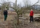 Obstbaumschnitt mit Herrn Rausch_34