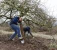 Obstbaumschnitt mit Herrn Rausch_36