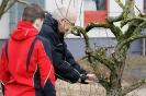 Obstbaumschnitt mit Herrn Rausch_5
