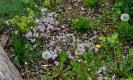 Gartenarbeiten auf dem Schulgelände_10