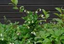 Gartenarbeiten auf dem Schulgelände_15