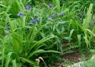 Gartenarbeiten auf dem Schulgelände_17