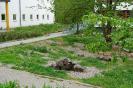 Gartenarbeiten auf dem Schulgelände_18