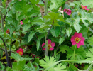 Gartenarbeiten auf dem Schulgelände_9