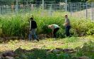SAP-Mitarbeiter und viele Schüler basteln, ernten und pflanzen_6