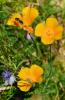Frühjahr bis Herbst